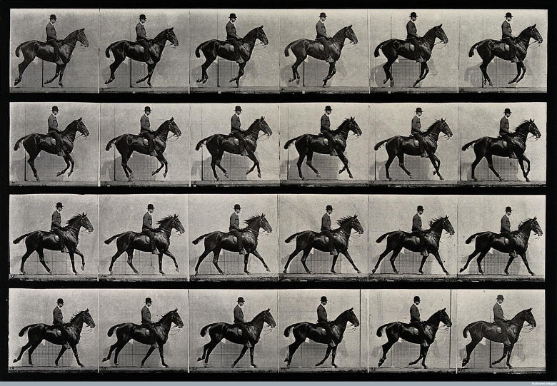 A cantering horse and rider, di Eadweard Muybridge, 1887 (da Photofestival 2016)